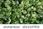 dumb cane wallpaper | Shutterstock . vector #1012137922