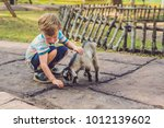 small cute boy is feeding a... | Shutterstock . vector #1012139602