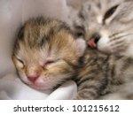 Stock photo newborn kitten and mother cat 101215612