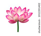 Lotus. Water Lily. A Realistic...