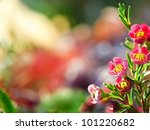 Bright Floral Background   Pink ...