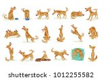 Stock vector brown dog set of normal everyday activities 1012255582