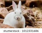 Stock photo white rabbit in farm 1012331686