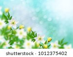 the first delicate spring... | Shutterstock . vector #1012375402