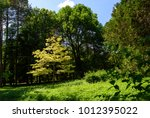 beautiful spring or summer view ... | Shutterstock . vector #1012395022