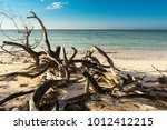 Dried Branches On The Beach Of...