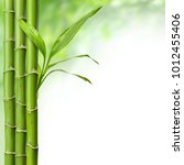 bamboo grove with leaves on the ... | Shutterstock . vector #1012455406