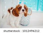 charming cavalier king charles... | Shutterstock . vector #1012496212