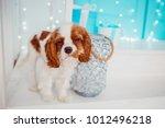 charming cavalier king charles... | Shutterstock . vector #1012496218