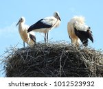 close up of stork nest with...   Shutterstock . vector #1012523932