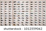sunglasses in a store | Shutterstock . vector #1012559062