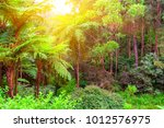 scenic view of jungle with...   Shutterstock . vector #1012576975