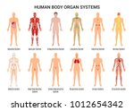 main 12 human body organ... | Shutterstock .eps vector #1012654342