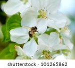 spring white flower and bee | Shutterstock . vector #101265862