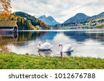 two white swans on the... | Shutterstock . vector #1012676788