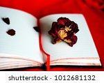 rose and open note book on a... | Shutterstock . vector #1012681132