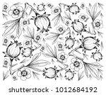 Fruit  Illustration Background...