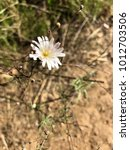 Small photo of Temecula Park wild flower
