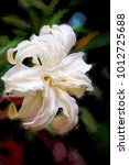 Stock photo a fresh white easter lily in a garden edited into an impressionistic painting from a photo black 1012725688