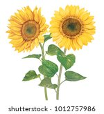 Sunflowers With Watercolor...