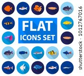 different types of fish flat... | Shutterstock . vector #1012767016
