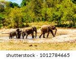 elephants at olifantdrinkgat ... | Shutterstock . vector #1012784665