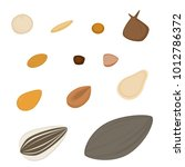 types of seeds   a variety of... | Shutterstock .eps vector #1012786372