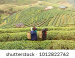 chiang mai  thailand   january  ... | Shutterstock . vector #1012822762