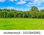green forest grass in the park | Shutterstock . vector #1012842082