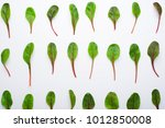 mangold salad leaves pattern ... | Shutterstock . vector #1012850008
