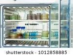agar medium and broth from the... | Shutterstock . vector #1012858885