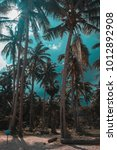 phangan   palm trees | Shutterstock . vector #1012892908