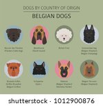 dogs by country of origin.... | Shutterstock .eps vector #1012900876