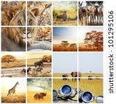 african safari collages | Shutterstock . vector #101295106