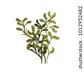 green underwater seaweed ... | Shutterstock .eps vector #1012952482