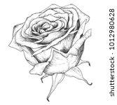 sketch rose blossom flower... | Shutterstock .eps vector #1012980628