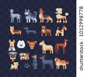 dog breeds set. flat pixel art... | Shutterstock .eps vector #1012998778