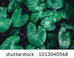 Green Tropical Leaf Nature...