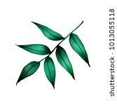 tropical leaf illustration... | Shutterstock . vector #1013055118
