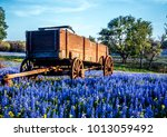 Wagon In Field Of Bluebonnets...