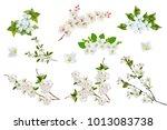 blossoming fruit branch... | Shutterstock . vector #1013083738