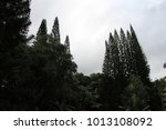dark forest in hawaii | Shutterstock . vector #1013108092