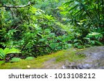 manoa falls hike on oahu | Shutterstock . vector #1013108212