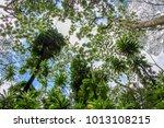 upward view of huge trees in... | Shutterstock . vector #1013108215