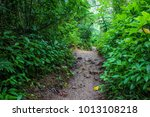 pathway to the rainforest on... | Shutterstock . vector #1013108218