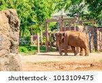 big elephant in hawaii | Shutterstock . vector #1013109475