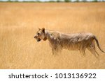 incredible close up view of a...   Shutterstock . vector #1013136922
