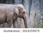 female friendly endangered... | Shutterstock . vector #1013155075
