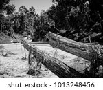 Dead Tree In A Creek After The...