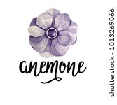 anemone lettering with anemone... | Shutterstock .eps vector #1013269066